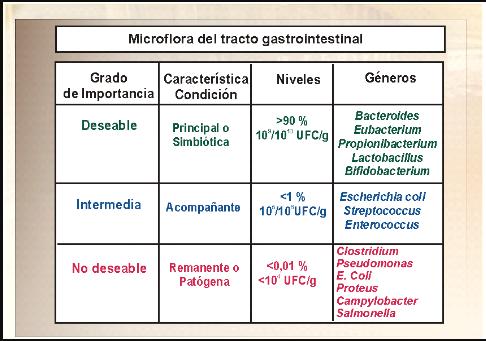 Flora intestinal, salud intestinal, avicultura, poultry, granja pollos, enviapro, probióticos