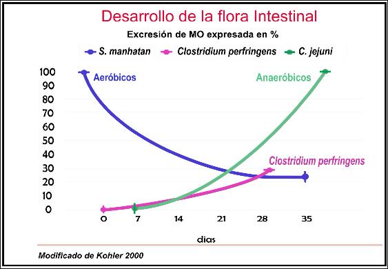 salud intestinal, cladan, avicultura, porcinos, avicultura argentina