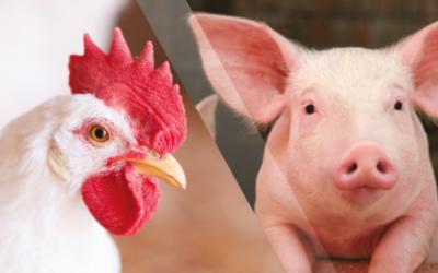 La importancia de un buen carrier en la elaboración de premezclas para la nutrición animal