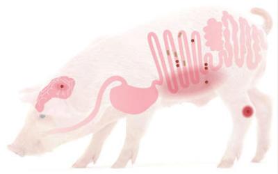 Estrategias no antibióticas para lograr una correcta salud intestinal