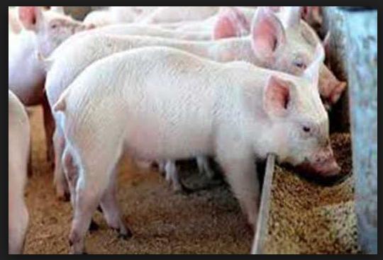 La biocontención, nuevo concepto de seguridad en las granjas