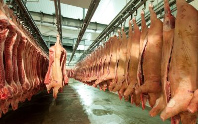 Porcicultura Argentina: Márgenes en recuperación