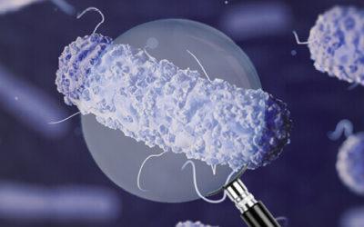 Diagnóstico de E. coli ETEC: la clave está en los factores de virulencia