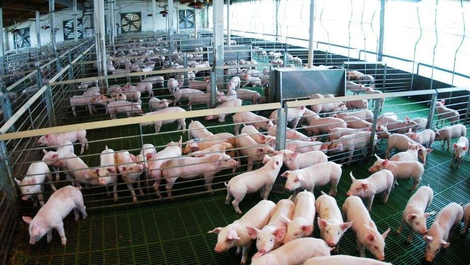 Entre Ríos: en la última década se triplicó la producción porcina en la provincia