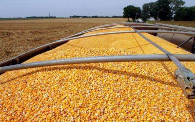 La variabilidad en la composición química de las materias primas y como controlarla en la formulacion de alimentos balanceados