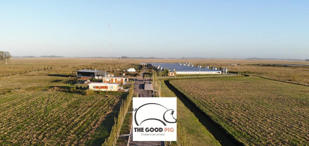 The Good Pig: Producción porcina de excelencia