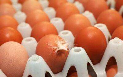 La producción mundial de huevos continúa aumentando